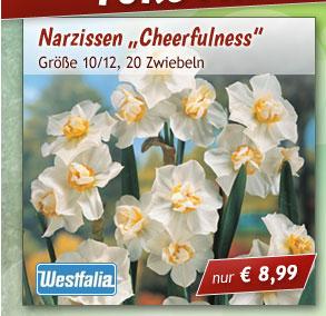 """Narzissen """"Cheerfulness"""""""